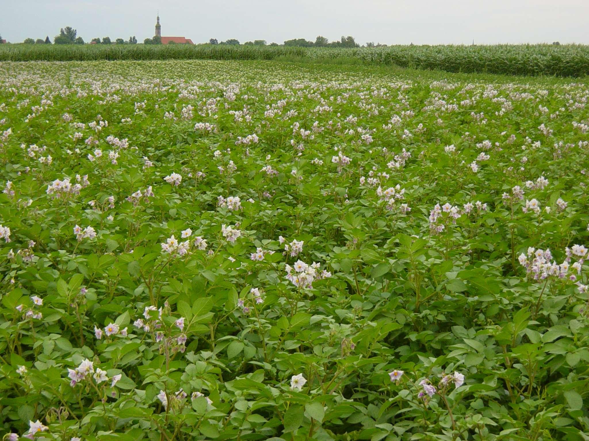 Maraichage de plein champ chambre d 39 agriculture moselle - Chambre d agriculture de la manche ...